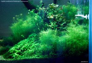 Акваскейп 650л, фрагмент аквариума.