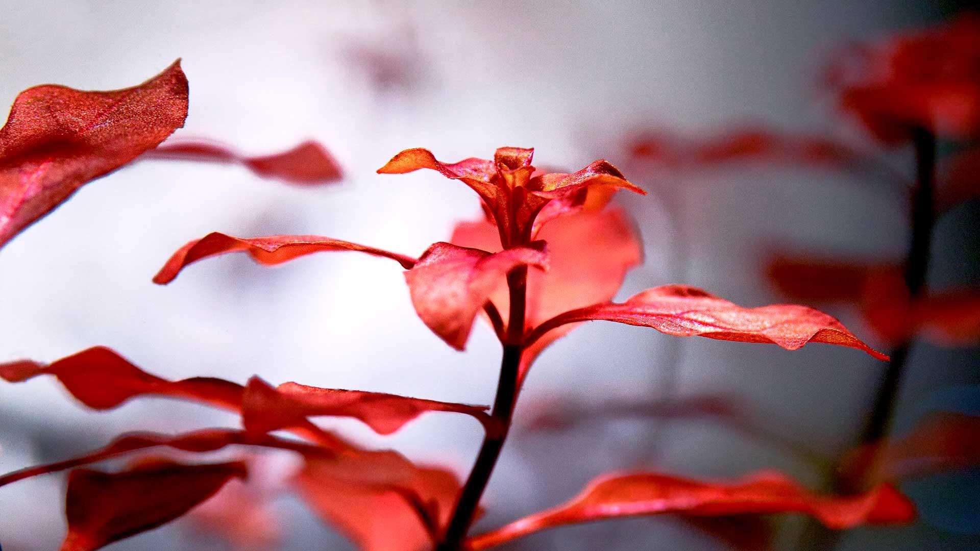 Удобрения для аквариумных растений «Praeclara plant»