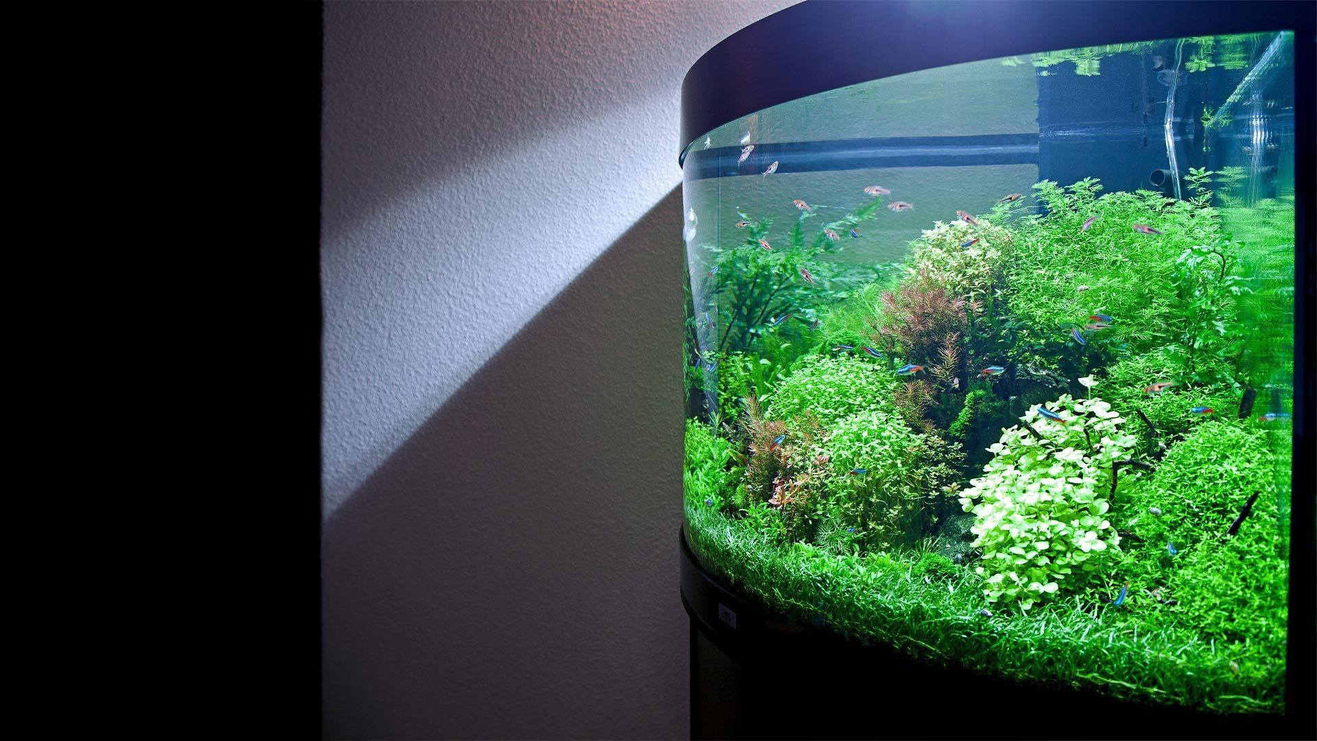 Оформление аквариума 190л, 3,5 месяца. Aquarium decoration 190l, Progress 3.5 months