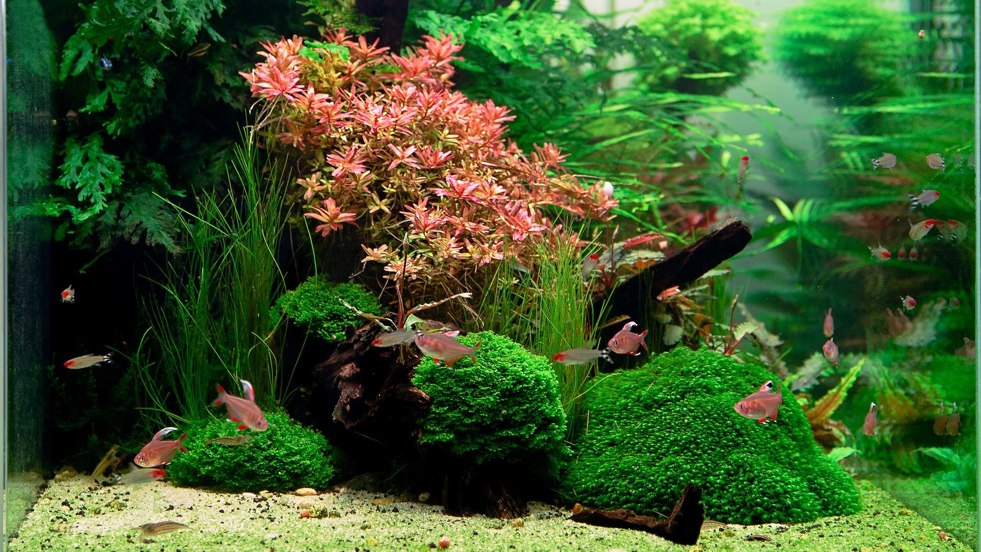 Аквариум 650л Aquascape