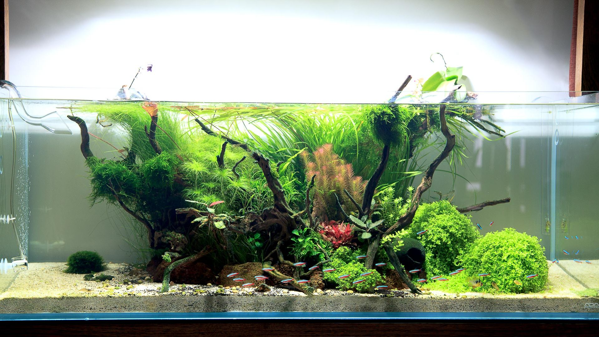 Оформление аквариума ADA, 243л.