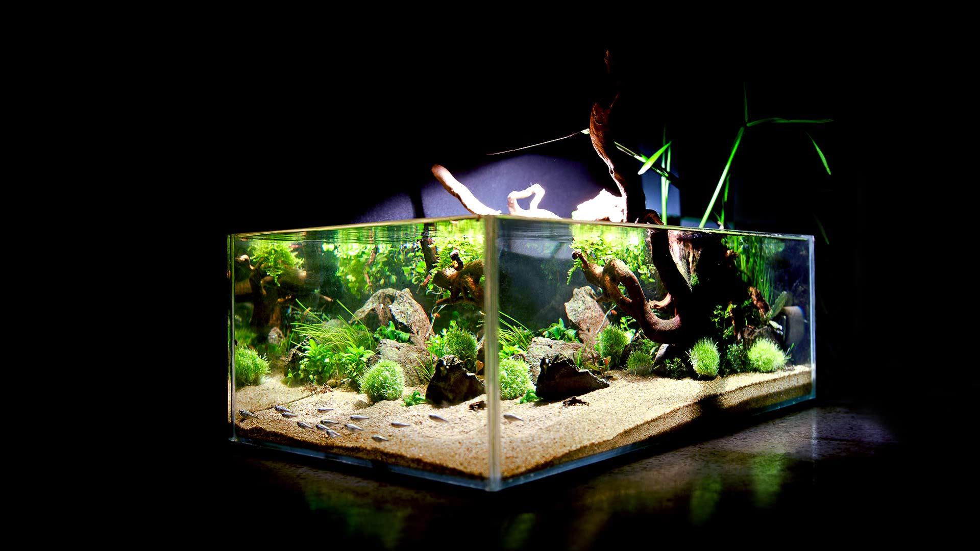 Аквариум в стиле вабикуса, 17л. Aquarium in the style of wabikusa.