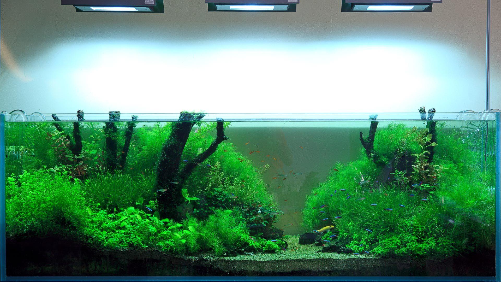 Сколько живет акваскейп?