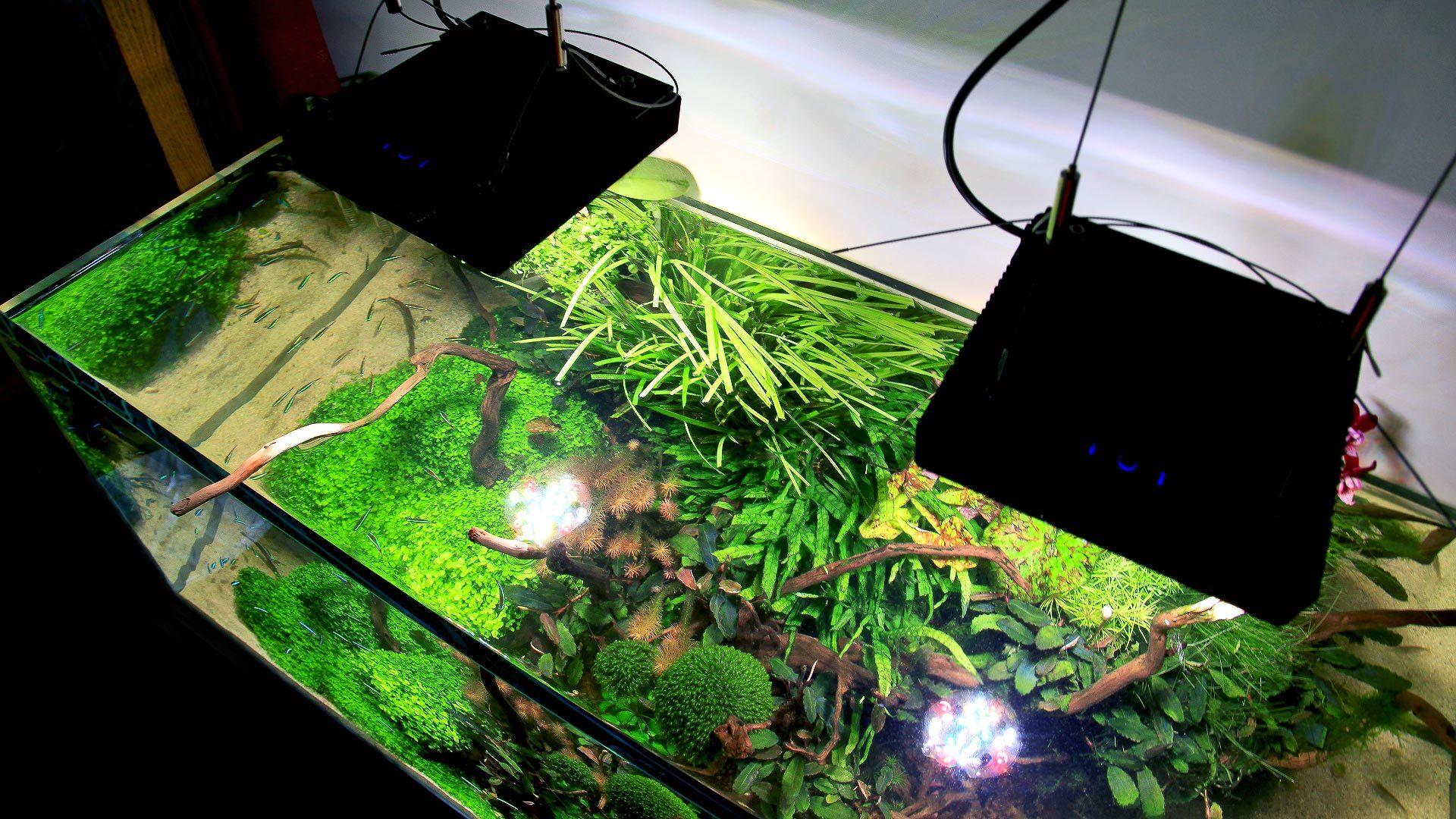 Светодиодные светильники Radion XR15FW Pro Freshwater в растительном аквариуме