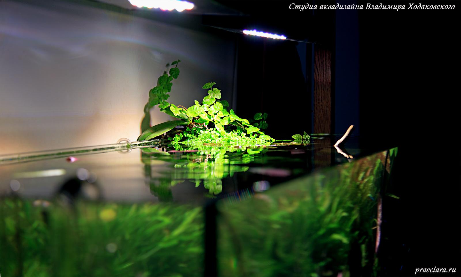 LED светильники в открытом природном аквариуме