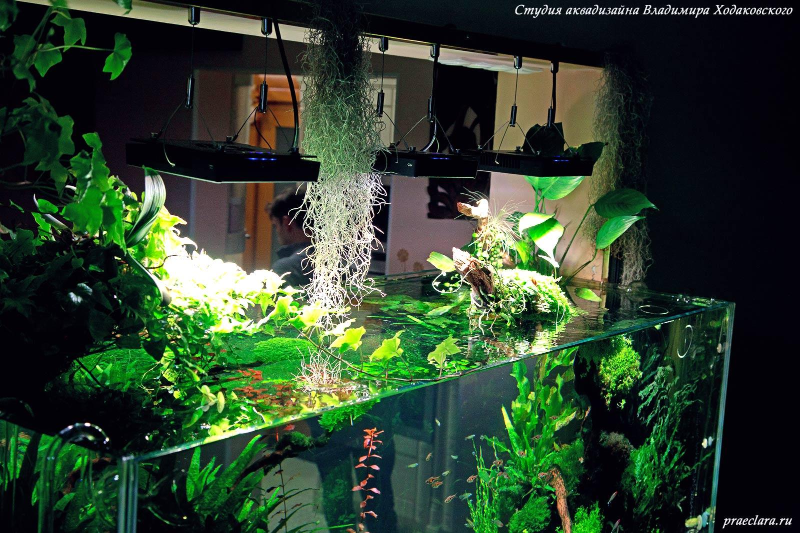 Светодиодные светильники в растительном аквариуме