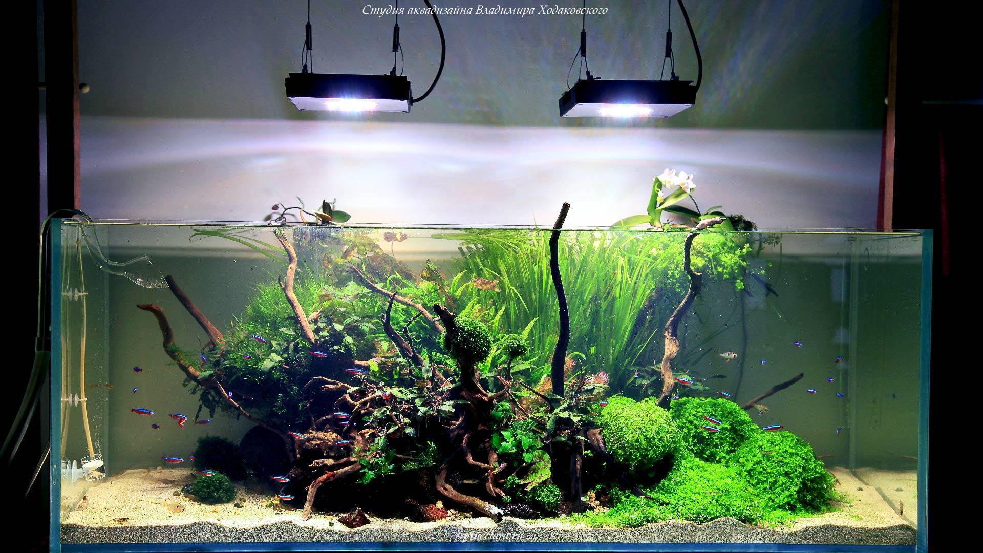 Светодиодные светильники для акваскейпа