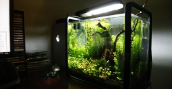 Нано-аквариум 17л в интерьере