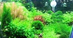 Общий вид аквариума 60л