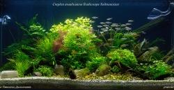 Оформление аквариума В безмятежность,135л, 2 месяца