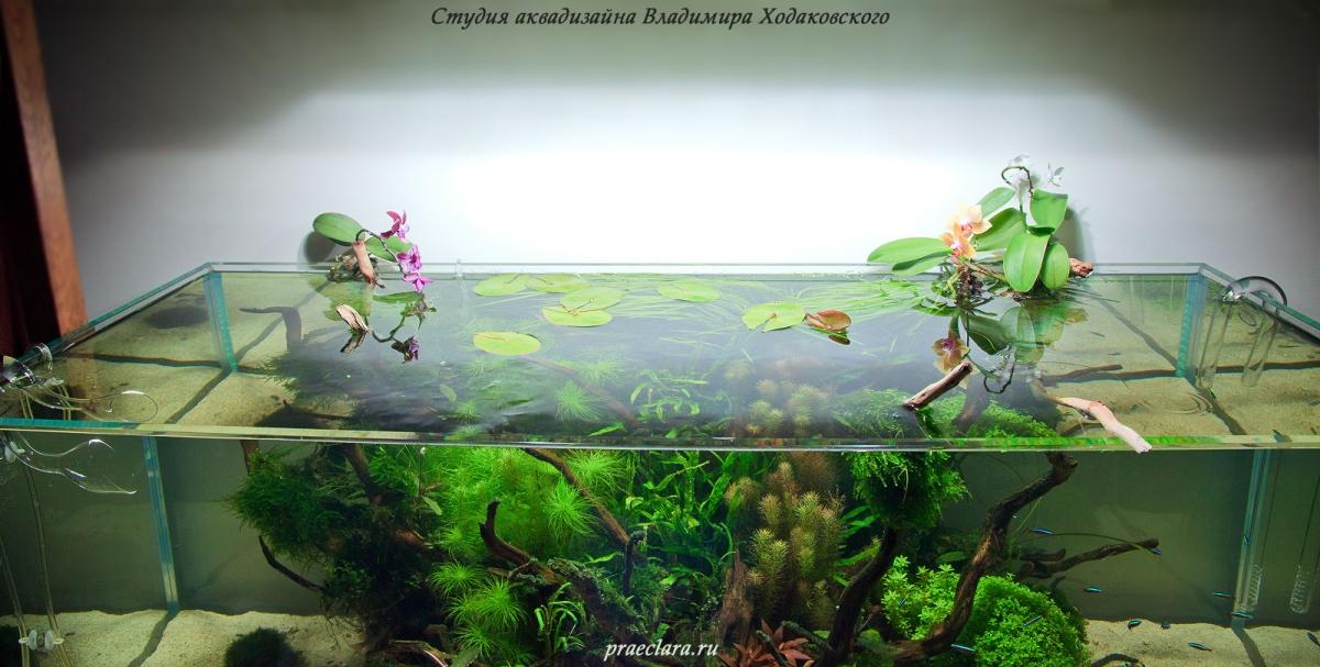 Орхидеи в открытом аквариуме