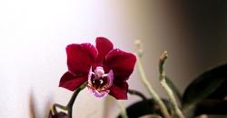 Орхидеи в аквариуме через 9 месяцев. Второе цветение.