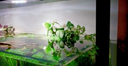 Орхидеи в аквариуме через 10 месяцев.