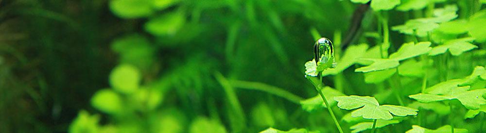 Аквариумные удобрения Praeclara Plant